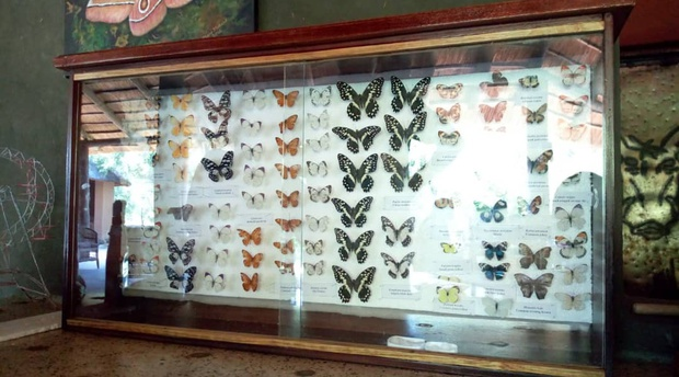 Butterfly Species at Munga