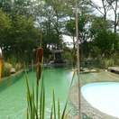 Bulrushes at pool, Munga Eco Lodge